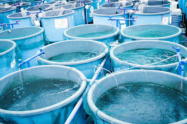 P&W EXPORT ADDS VALUE TO AQUACULTURE PROCESSING